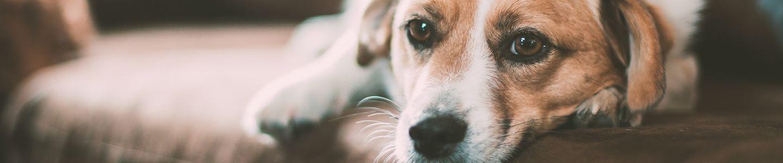 Erlass der Hundesteuer
