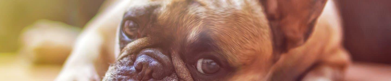 Antrag auf Erlass der Hundesteuer